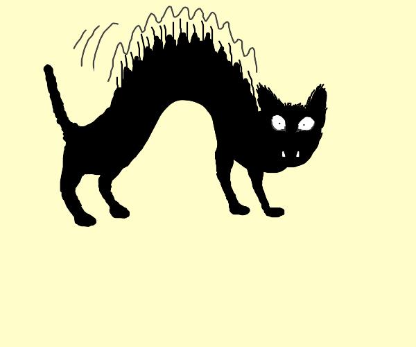 Startled black cat
