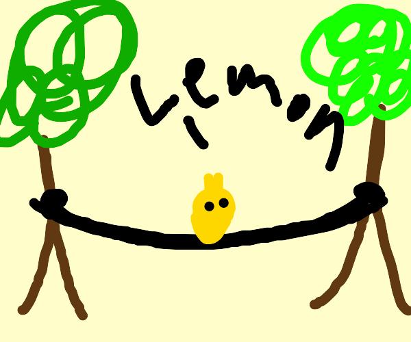 Lemon in a Hammock