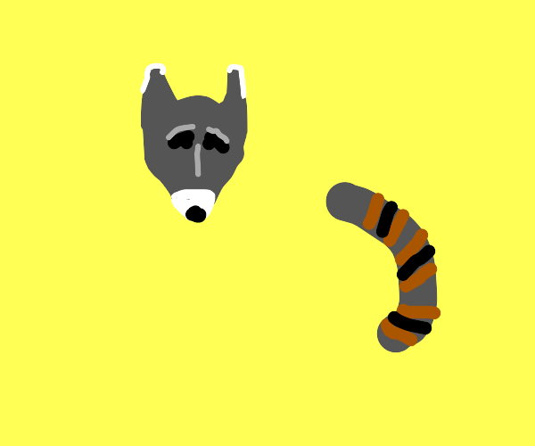 raccoon but only its head and tail