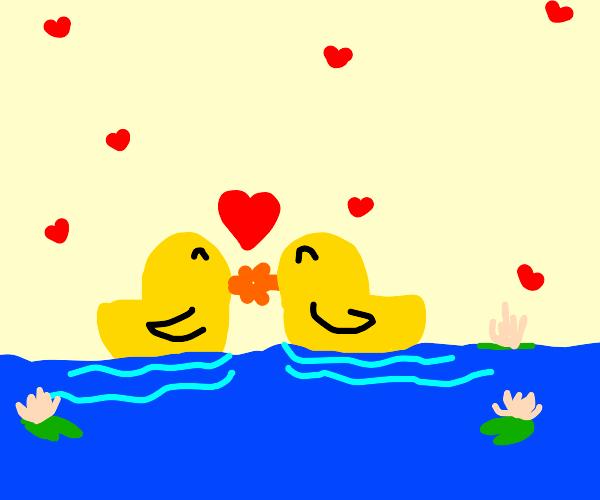 rubber ducks in love