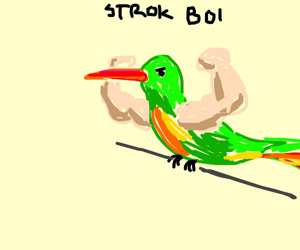 Athletic Hummingbird