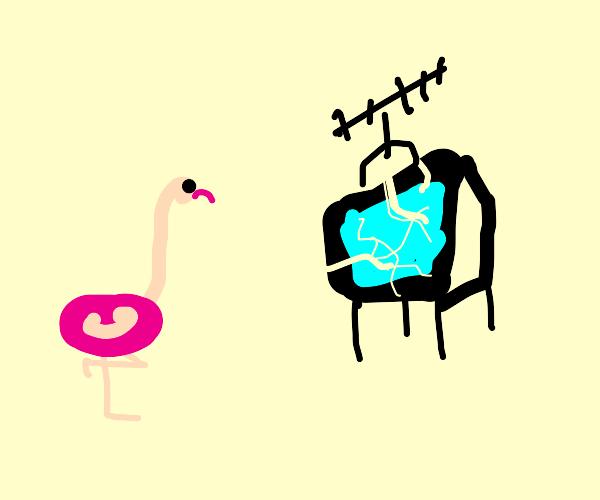 flamingo watching a broken tv