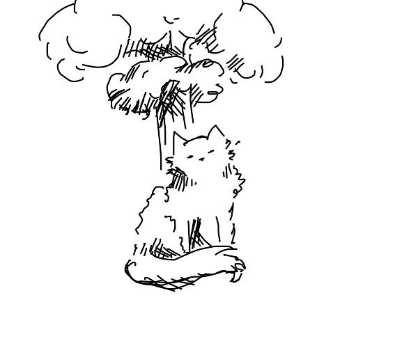 cat exploding