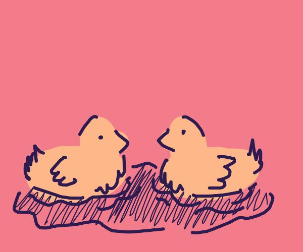 Two ducks swiming on the ocean