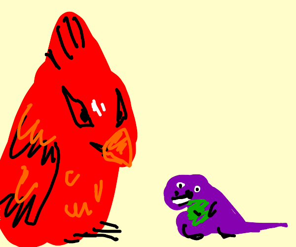red bird looking at barney