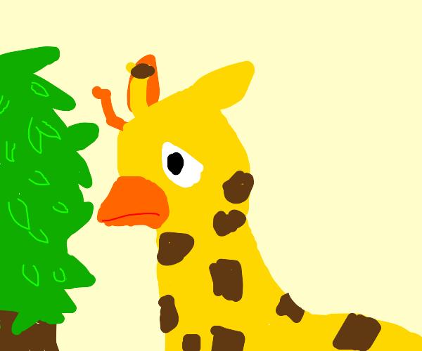 Giraffe with beak is sad it can't eat leaves