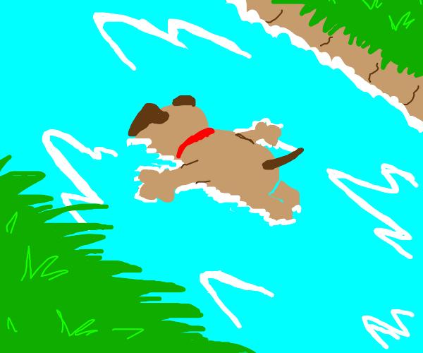 Dead drowning dog