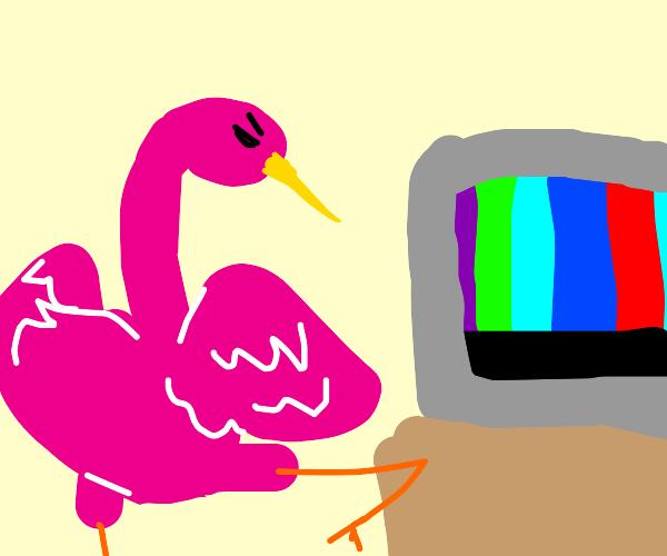 flamingo gets mad at tv