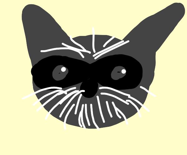 Raccoon smells bad