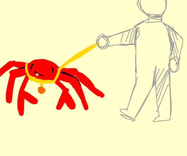 taking a spider crab on a walk