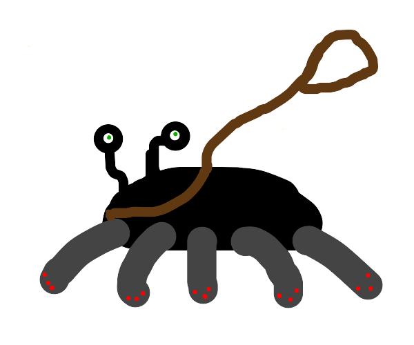 Pet Centipede