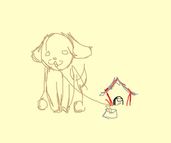 Dog has a pet doghouse