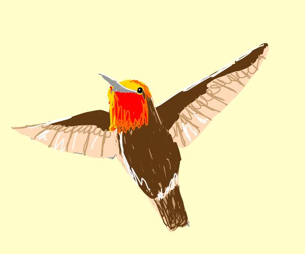 Hummingbird Aging