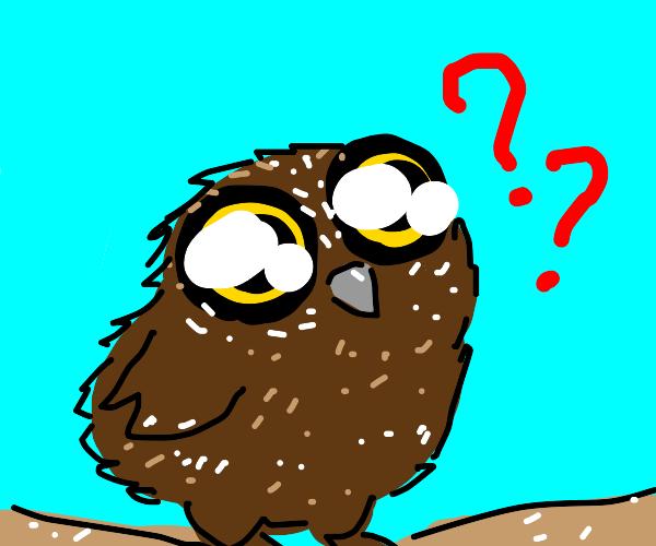 Cute owl being confused