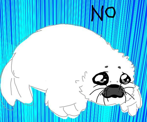 """Lil seal say """"NO."""""""