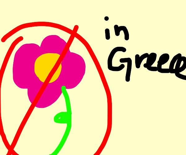 No flowers in Greece