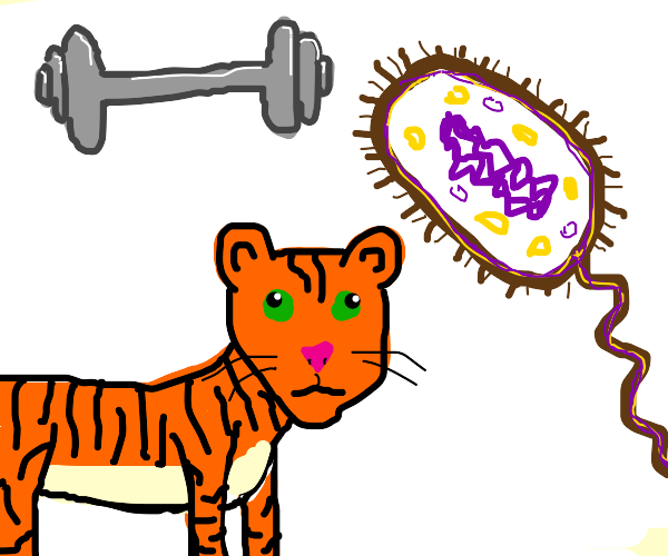 a dumbbell a bacteria and a tiger