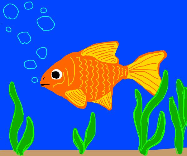 Goldfish blowing bubbles