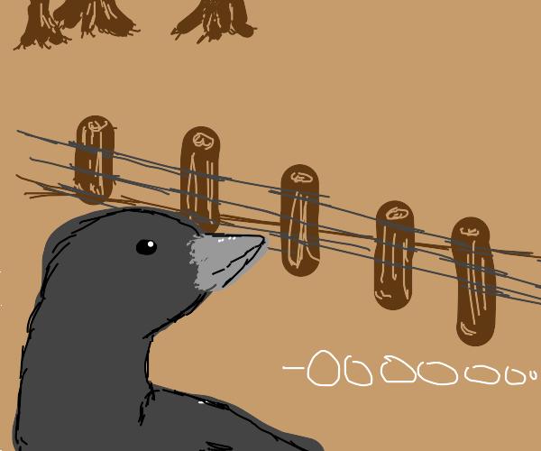 Crow saying OOOOOOOOOOO