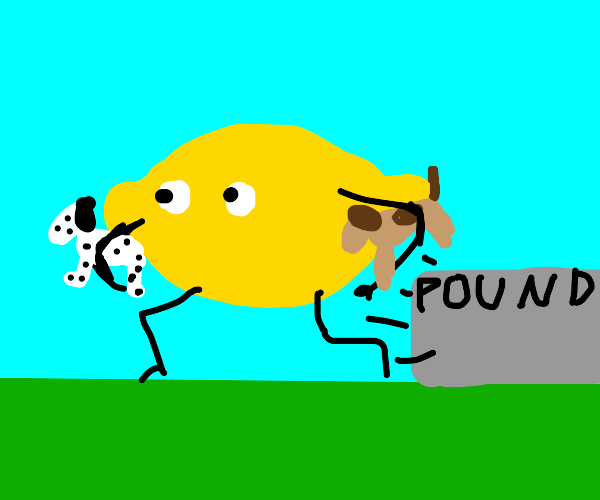 A lemon steals dogs from the pound