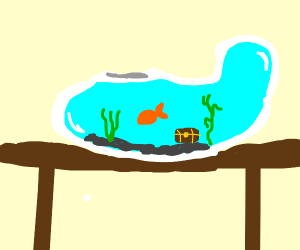 fish in a funky shaped fish bowl