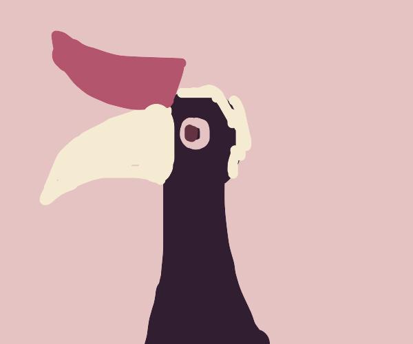 hornbill(look up if needed)