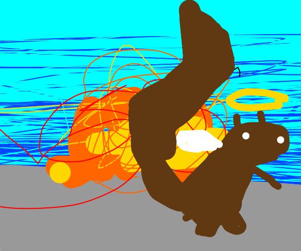 raccoon angel flees explosion