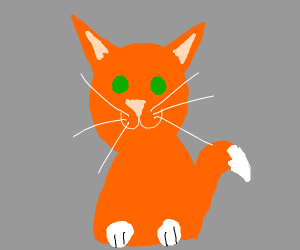 orange cat with green eyes