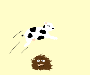 cow jumping over hairy mass with face
