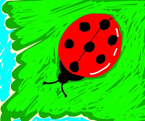 a ladybug on a leafe