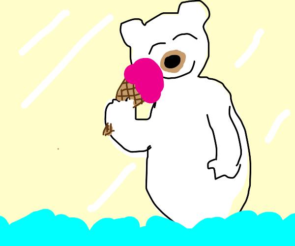 Polar bear eats ice cream