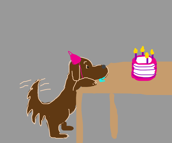 doggo has birth day, admires birthday cake
