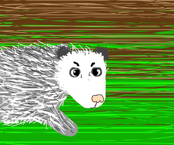 An Angry Possum