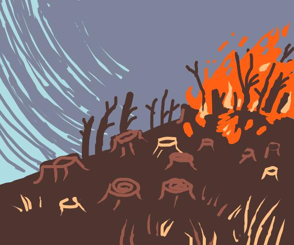 Deforestation on a hill.