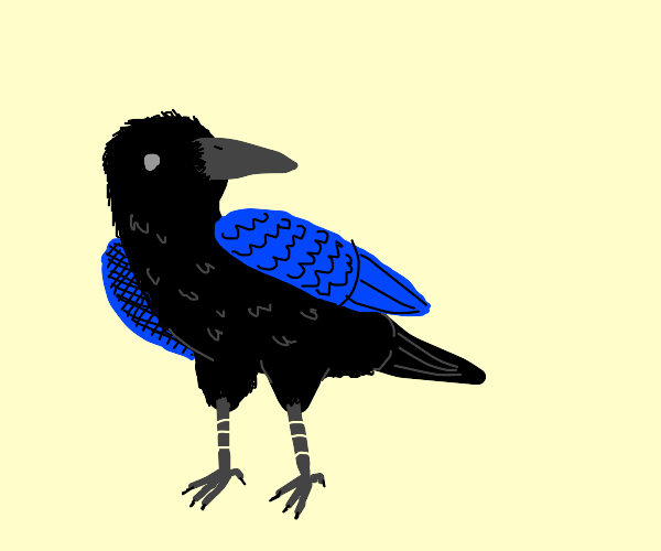 Crow with blue wings
