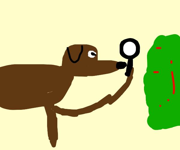 dog eyes green stuff curiously