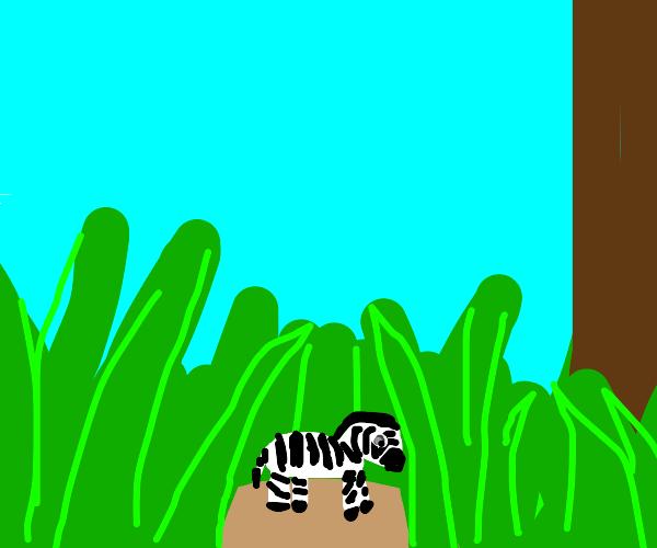 Tiny zebra in the grass