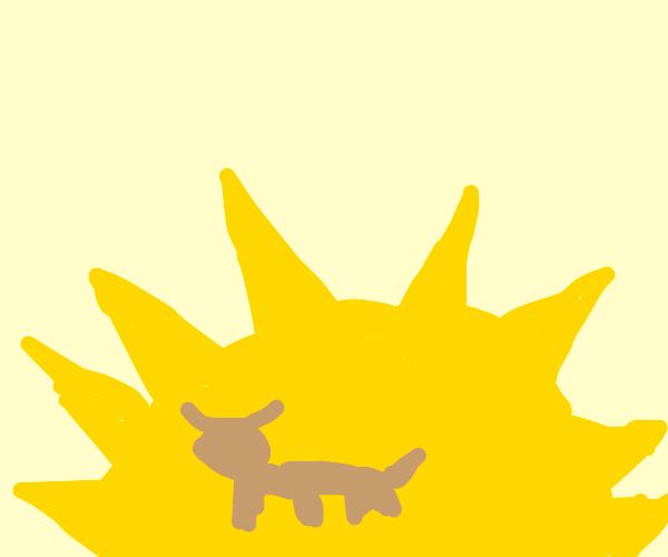 Buffalo on the Sun