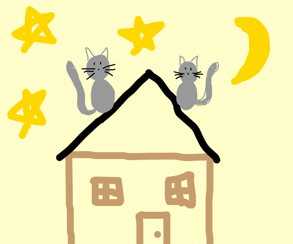 2 cats on a roof at night