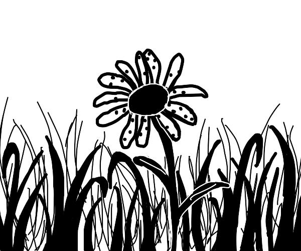Daisy with spots