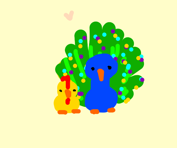 Chicken and peacock are pals