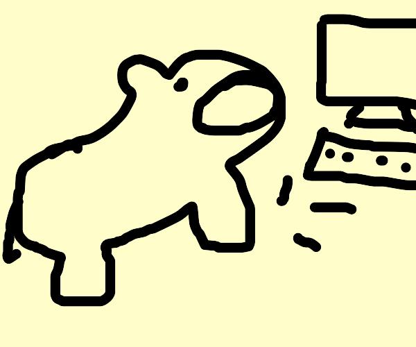 Programmer Hippo