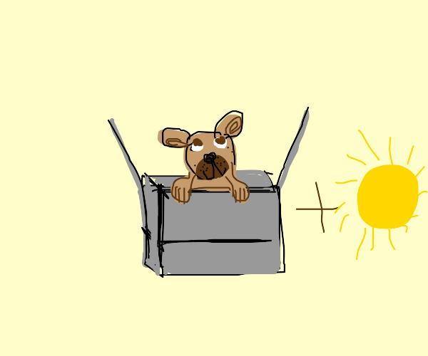 Dog in box with sun