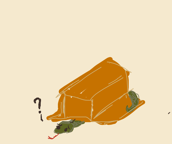 Snake hiding under a box