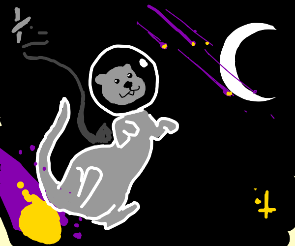 Space otter explores the universe