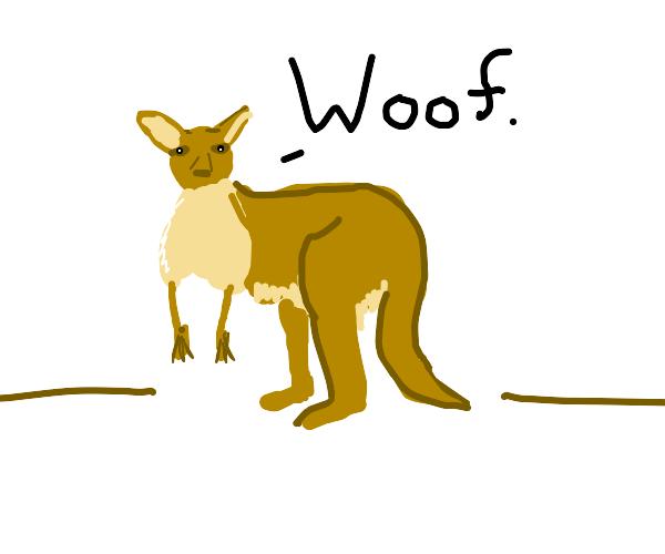 Kangaroo Baking