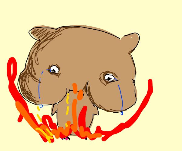 A burning hamster
