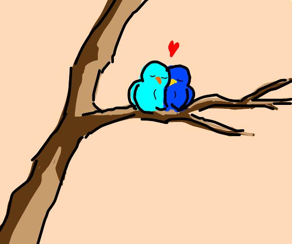 2 cute blue birds on a tree branch