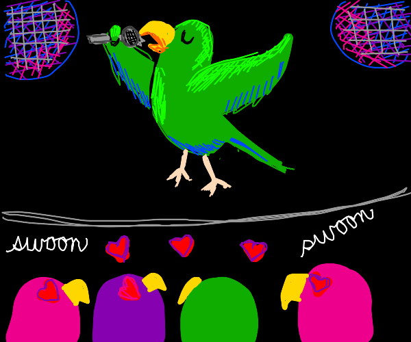 parrot seducing chicks by singing at disco