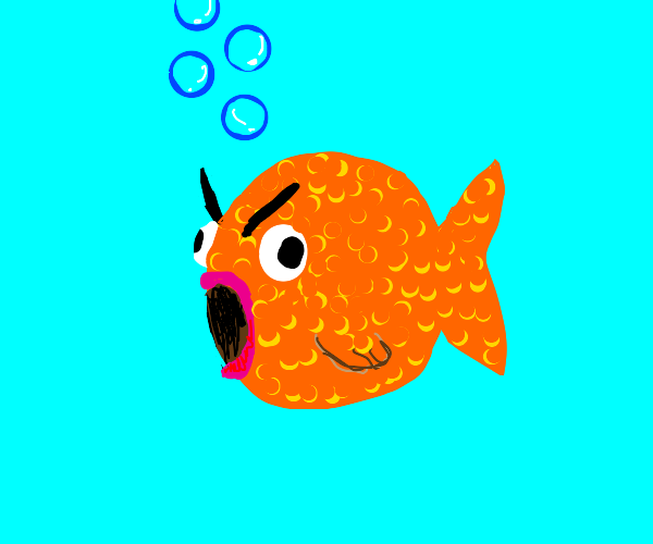 one V E R Y grumpy goldfish